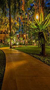 Картинка Таиланд Парк Тропический Пальм Уличные фонари Газон Тротуар Pattaya Природа