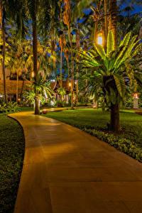 Картинка Таиланд Парк Тропический Пальм Уличные фонари Газон Тротуар Pattaya