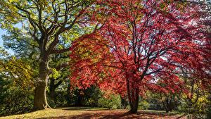 Фотография Англия Сады Осень Деревья Clyne Gardens Swansea Природа