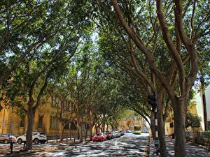 Обои Мальта Здания Дороги Улице Дерево Floriana Города