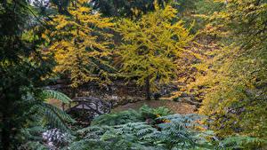 Картинки Австралия Парки Осенние Пруд Мосты Деревья Alfred Nicholas Memorial Gardens Природа