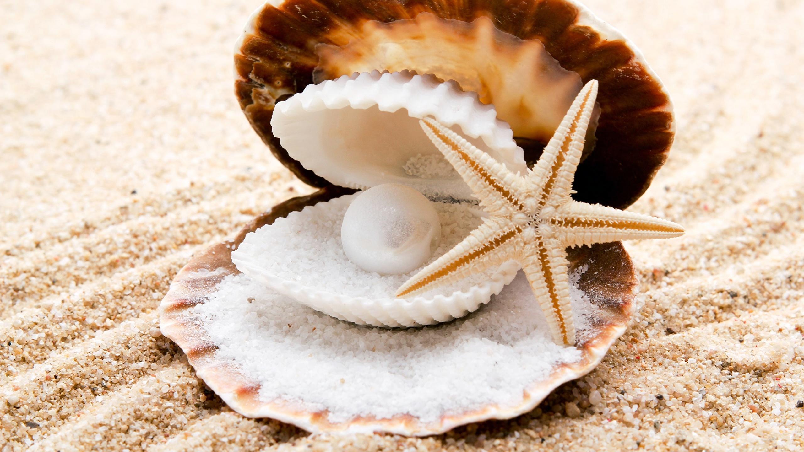 природа украшения морская звезда раковина скачать