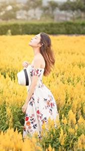 Картинки Поля Азиатки Размытый фон Шатенка Платье Шляпы