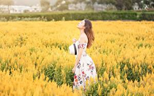 Картинки Поля Азиатки Размытый фон Шатенка Платье Шляпы Девушки