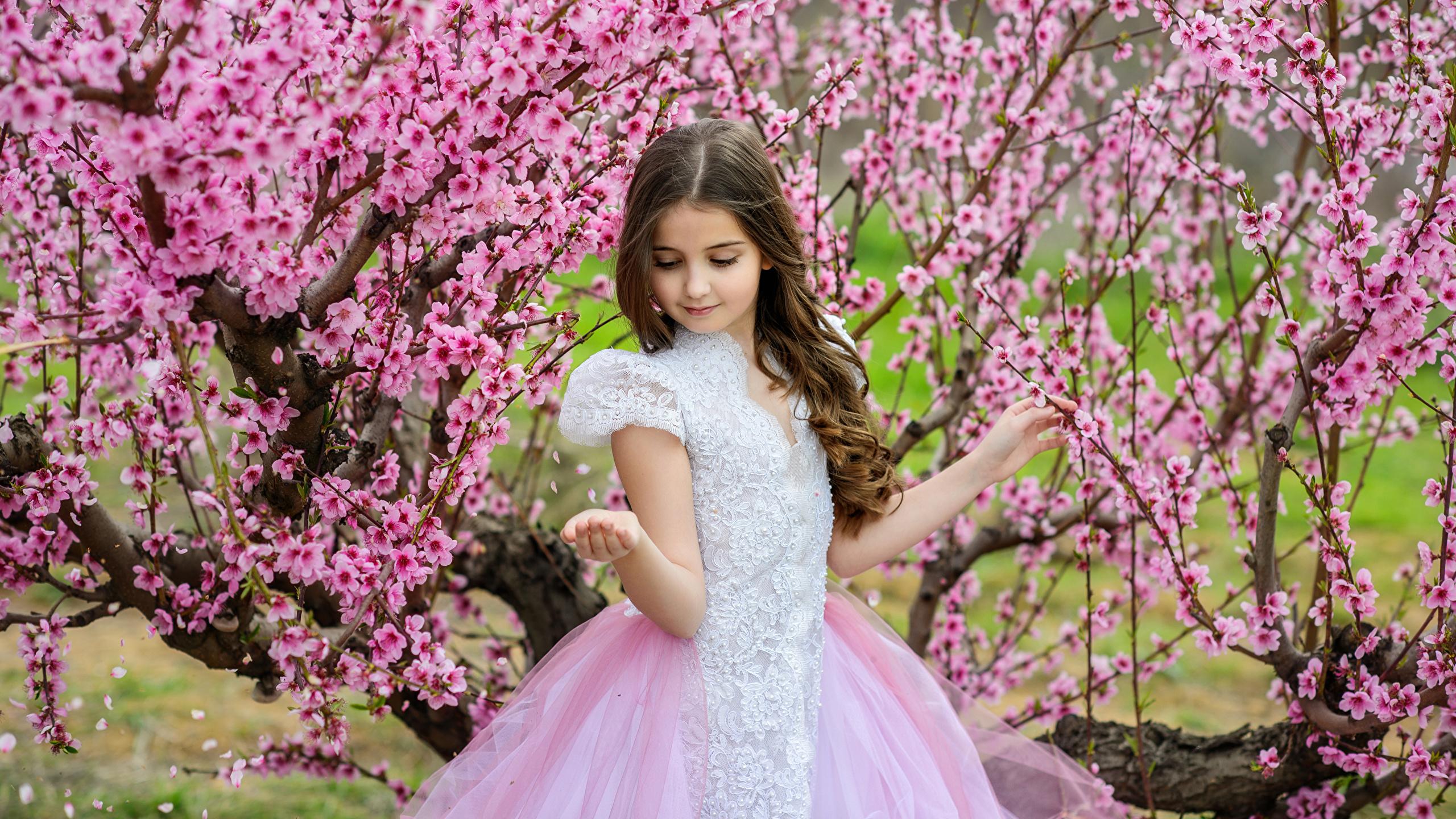 Фото Девочки ребёнок весенние Платье Цветущие деревья 2560x1440 девочка Дети Весна платья