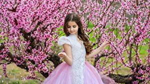 Фото Весенние Цветущие деревья Девочки Платье Дети