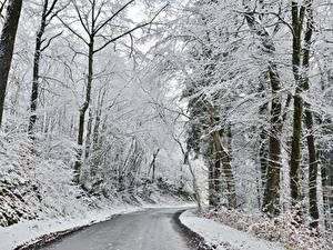 Фото Зима Леса Дороги Снега Деревья