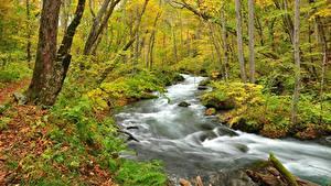 Картинки Осень Лес Река Дерева Природа