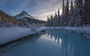 Фотографии Канада Парки Зимние Горы Речка Пейзаж Банф Ель Снег Природа