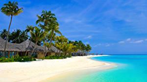 Фотография Тропики Берег Здания Пальмы Пляж Бунгало