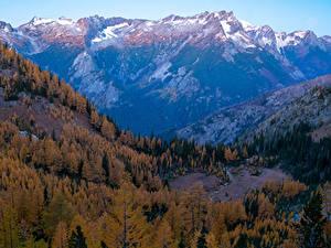 Фото США Гора Лес Осенние Вашингтон Carne Mountain