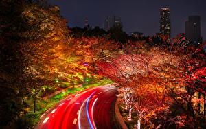 Картинка Япония Токио Дороги Осенние Деревья Ночные Природа
