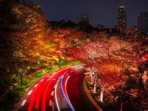 Картинка Япония Токио Дороги Осенние Дерево Ночные Природа