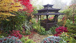 Фото Англия Сады Пагоды Осень Кусты Walsall Garden Природа