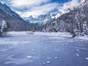 Фотографии Пейзаж Гора Леса Зима Озеро Словения Снега Альп Kranjska Gora Lake Jasna Julian Alps