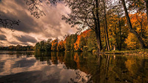 Фотографии Польша Осень Озеро Леса Деревья Lake Hancza Природа