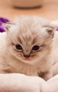 Фотография Кошки Котенок Животные