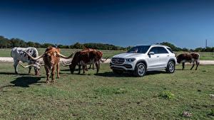 Фотография Мерседес бенц Быки Серебристый Рога 2019 GLE 450 4MATIC Автомобили Животные