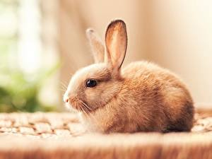 Картинки Кролики Красивые Животные
