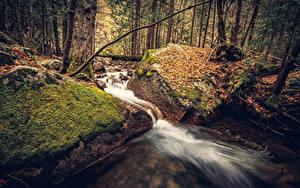 Фотография Штаты Парк Осенние Леса Камень Йосемити Лист Мох Ручеек Природа