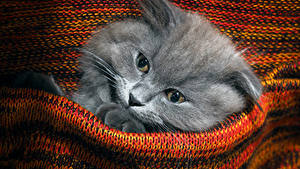 Обои Кошка Котят Морды Взгляд Свитер животное
