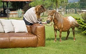 Фото Лошадь Диван Подушки Траве Шатенки Сидящие животное
