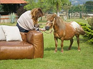 Фото Лошади Диван Подушки Трава Шатенка Сидящие Животные