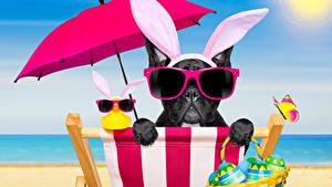 Картинка Праздники Пасха Собаки Французский бульдог Яйца Зонт Очки Ушки кролика Смешные Лежаки Животные