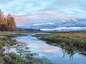 Фотография Россия Горы Леса Трава Altai