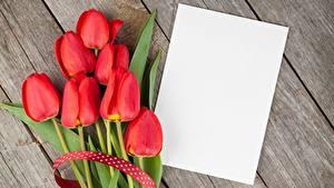 Фотографии Тюльпан Красные Доски Лист бумаги Шаблон поздравительной открытки цветок
