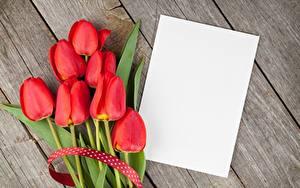 Фотографии Тюльпаны Красные Доски Лист бумаги Шаблон поздравительной открытки Цветы