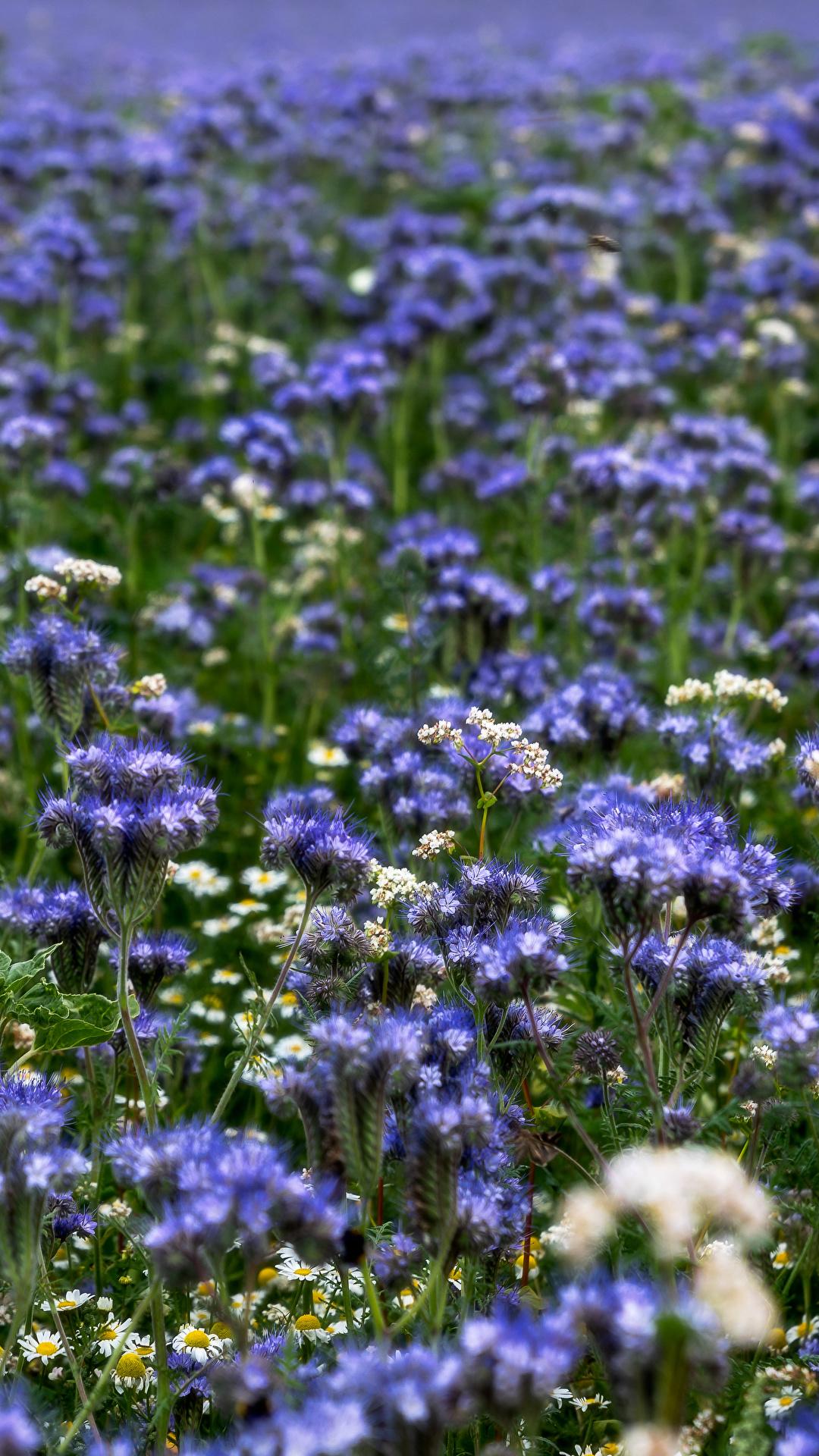 Обои размытый фон, цветок. Цветы foto 16