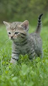 Фотография Кошка Трава Котята Боке животное