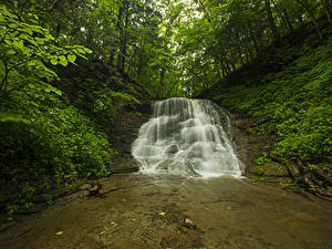 Обои Леса Водопады