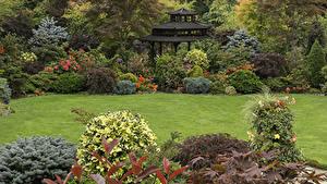 Фотография Англия Сады Пагоды Газоне Кусты Walsall Garden Природа