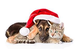 Картинка Новый год Собаки Коты Белом фоне Двое Шапка Щенков животное