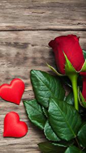 Картинки День святого Валентина Роза Доски Сердца Красный Листва цветок