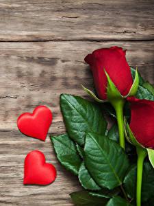 Картинки День святого Валентина Роза Доски Сердце Красный Листва Цветы
