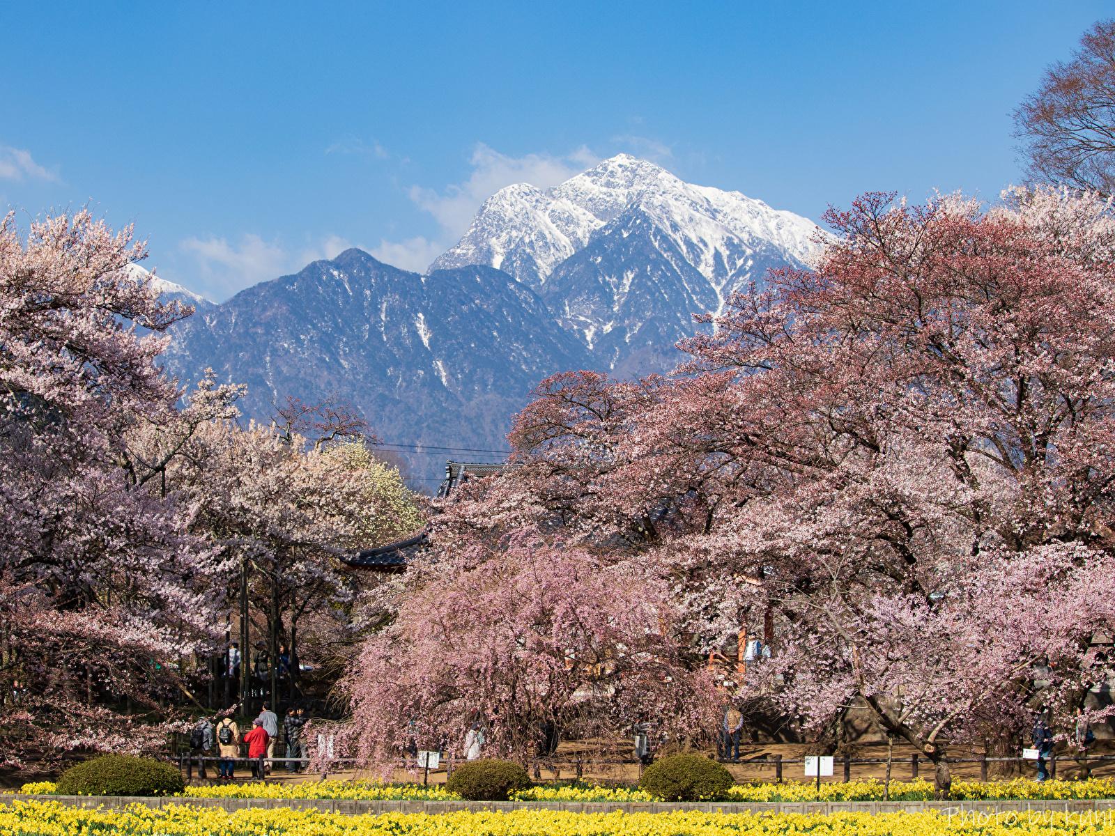 Фото Япония Hokuto Yamanashi Prefecture Горы Природа парк Цветущие деревья 1600x1200 гора Парки