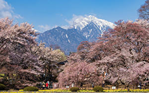 Фото Япония Парки Горы Цветущие деревья Hokuto Yamanashi Prefecture
