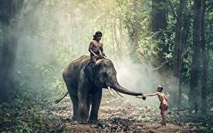 Обои Леса Слоны Азиатки Мальчишка Тумане