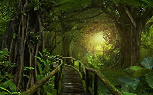 Обои Леса Мост Мох Jungle Природа