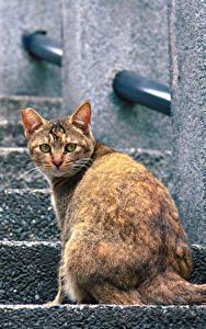 Картинка Коты Сидящие Лестницы