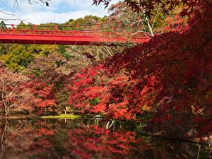 Картинка Япония Парки Пруд Мосты Осенние Деревья Izumi Nature Park Природа
