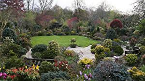 Обои Англия Сады Газон Кусты Walsall Garden Природа