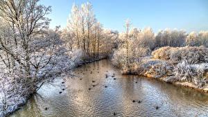 Картинка Россия Санкт-Петербург Парки Зима Речка Утки Дерево Park Esenina Природа