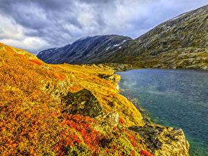 Картинки Норвегия Гора Озеро Осень Трава Природа