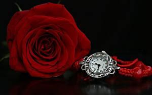 Картинки Розы Часы Красный