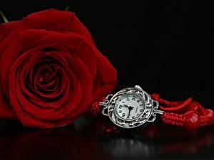 Картинки Розы Часы Красный Цветы