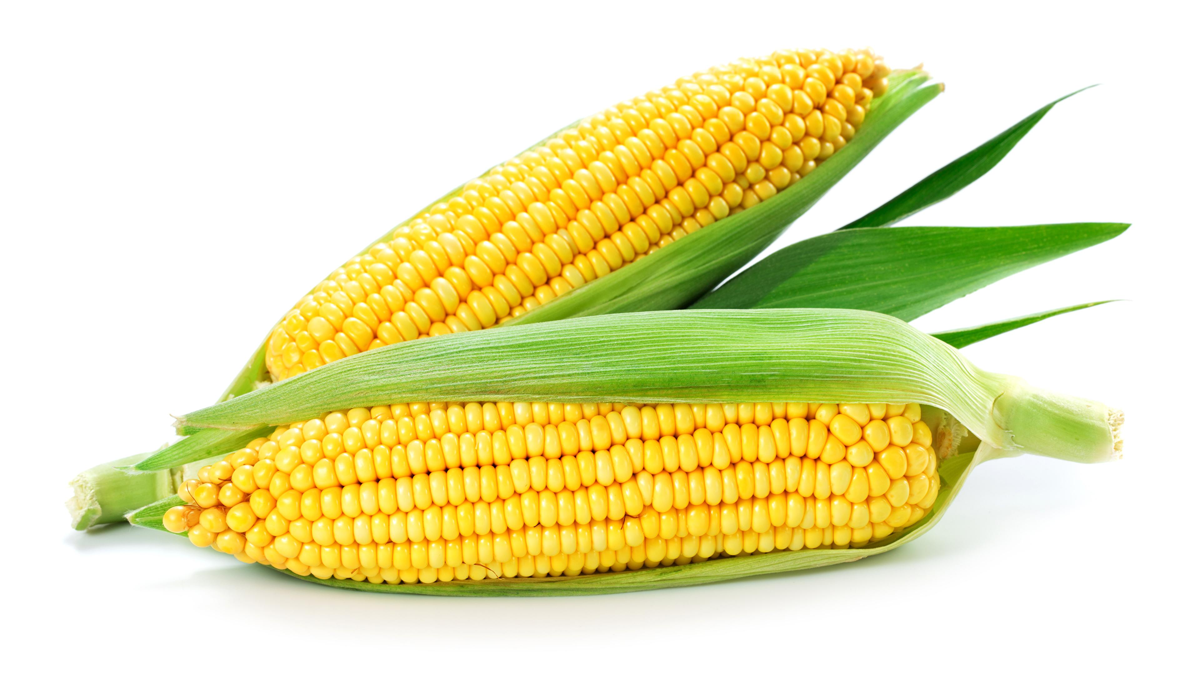 Картинка Двое Кукуруза Еда Овощи белым фоном 3840x2160 2 два две вдвоем Пища Продукты питания Белый фон белом фоне